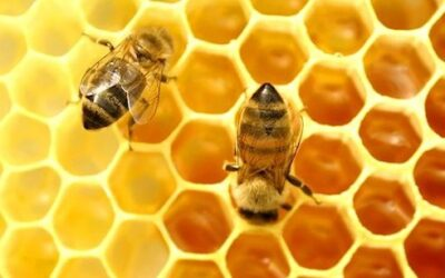 Honey is the only healthy sweetener, even for people with diabetes